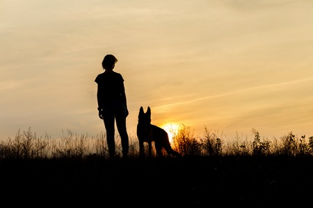 Girl and dog at sunset on the grass. Stock Photo