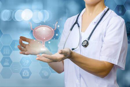 El concepto de tratamiento del sistema urinario. Un trabajador médico muestra la vejiga. Foto de archivo