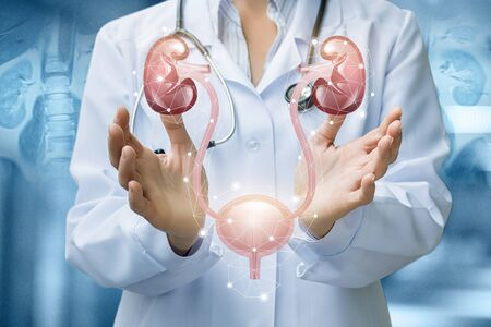 The doctor shows the urinary system on blurred background. 免版税图像 - 127754055