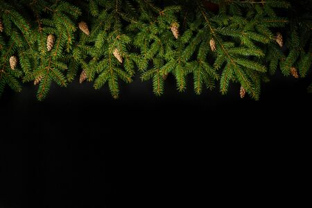 Branch of Christmas tree on black background. Decorative Christmas background.
