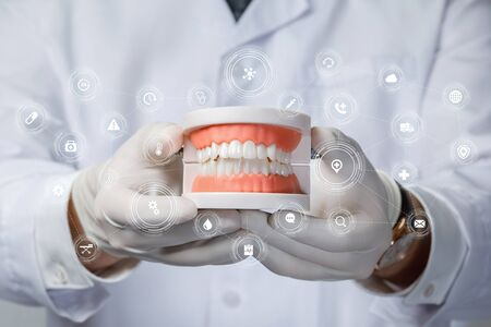 The concept of prosthetics. The doctor shows the model of the oral cavity with teeth. 免版税图像