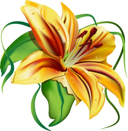 tiger lily: beautiful  lily,  beautiful flower, green leaves, yellow lily, tiger; flavor; vector, illustration, character, pleasant emotions; elegant