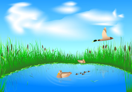 blue lake with grass and a family of ducks on blue sky background Vector