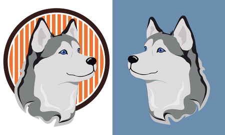 siberia: beautiful medal husky isolation on a white and blue background