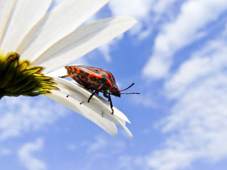 ladybug on flower under blue sky photo