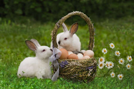 Easter  Hares with a basket of eggs photo