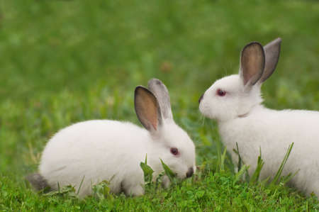 Baby white rabbit in grass  photo