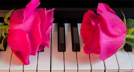 Two pink roses on black and white piano keys. Flowers on a musical instrument. Greeting card. International women's day, mother's day, romance, love, flowers