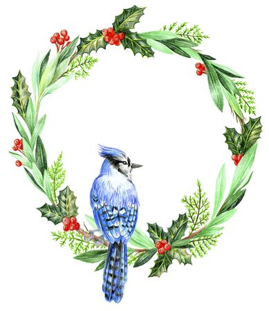 Christmas wreath blue jay on a branch. Holly and thuja.