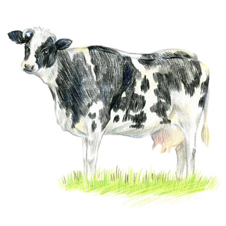 Big cow in the meadow. Full-length image. Sketch made with colored pencils.