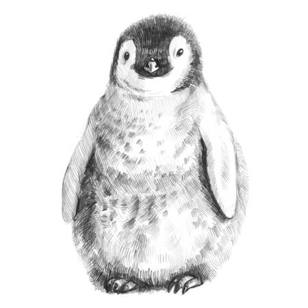 King Penguin. Cute baby. Pencil sketch isolated on white background.