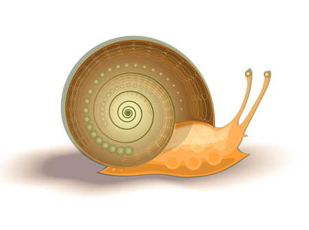 thin shell: illustration of brown helix Illustration