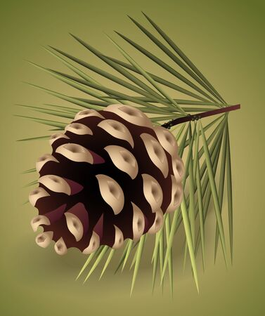 pinecone: illustration of brown pine-cone