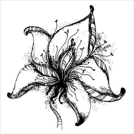 graphic: Graphic hand drawn vector flower