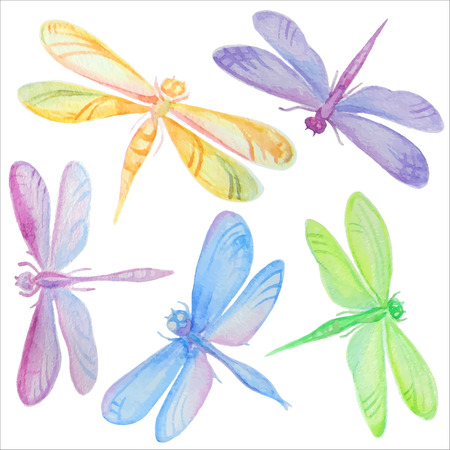 Vector set of beautiful hand drawn watercolor dragonflies. Çizim