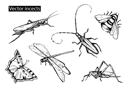 Insects sketch decorative icons set with dragonfly, fly, butterfly, beetle, grasshopper. Hand drawn vector illustration. Ilustração