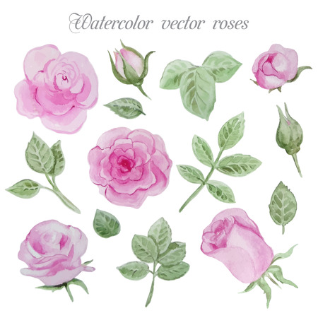 Watercolor roses elements set, leaves and flowers. Vector hand drawn design illustration Illustration