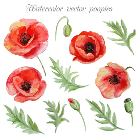 Vector set of red watercolor poppy flowers Vectores