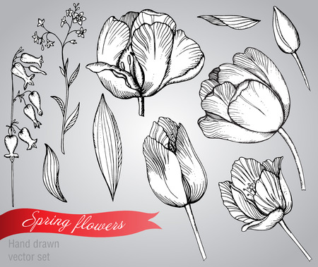 Vector set of graphic spring flowers (tulips, forget-me-not). Elements for design.