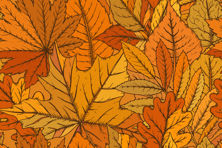 autumn leaves background: Vector seamless pattern with highly detailed hand drawn leaves. Autumn forest background