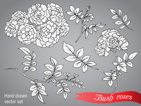 thorn bush: Vector collection of  hand drawn bush roses isolated on grey background Illustration