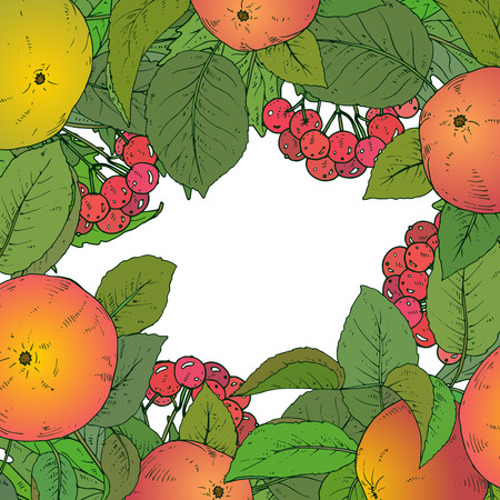guelder rose: Vector template with  hand drawn apple branches and guelder rose berries. Autumn frame