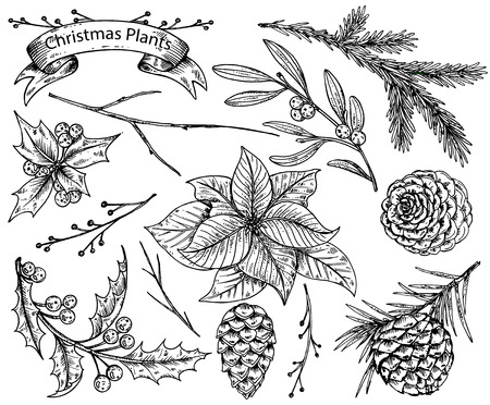black and white cone: Set of  hand drawn winter plants - poinsettia, mistletoe, fir-cone, holly. sketch  illustration. Can be used for greeting and invitation cards, banners, postcards.