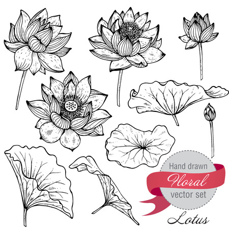 flor de loto: Vector conjunto de flores y hojas de loto dibujados a mano. Bosquejo colección botánica floral en estilo blanco y negro gráfico