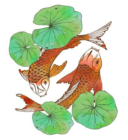 蓮の葉と水彩テクスチャ 2 鯉魚 (鯉) のベクトル イラストを手描き。愛、友情および繁栄のシンボルです。  イラスト・ベクター素材