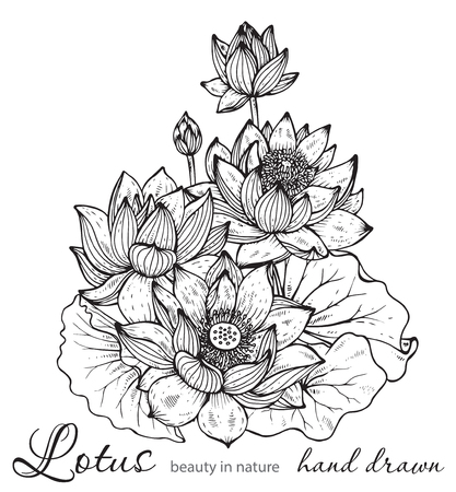 nymphaea: Beautiful monochrome vector floral bouquet of lotus flowers and leaves in graphic style. Illustration