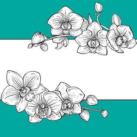 fragrant bouquet: Beautiful vector floral frame with orchid branches with flowers in graphic style Illustration