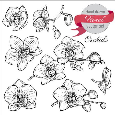 手のベクトルを設定には、花と蘭の枝が描かれています。白と黒のグラフィック スタイルの花植物コレクションをスケッチします。