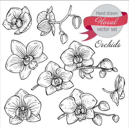 Vector set of hand drawn orchid branches with flowers. Sketch floral botany collection in graphic black and white style