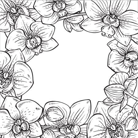 fragrant bouquet: Beautiful monochrome vector floral frame with orchid branches with flowers in graphic style Illustration
