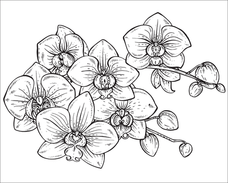Beautiful monochrome vector floral bouquet of orchid branches with flowers in graphic style.