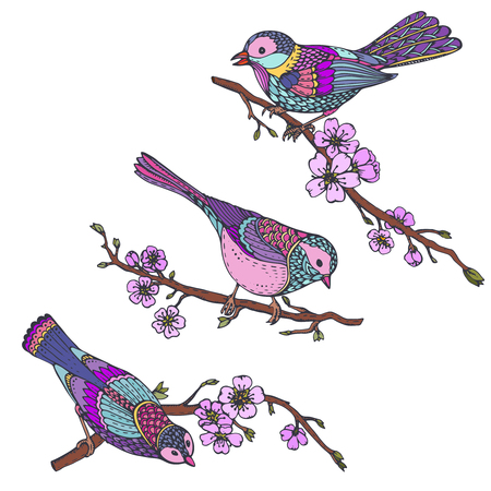tomtit: Ste of hand drawn ornate birds on sakura branches with flowers. Beautiful colorful vector illustration. Each object is isolated on a white background. Illustration
