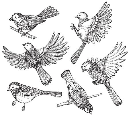 Ste von Hand verzierten Vögel gezeichnet. Schwarz-Weiß-Vektor-Illustration. Jedes Objekt ist auf einem weißen Hintergrund isoliert.