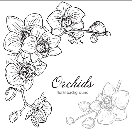 Beautiful monochrome vector floral background with orchid branches with flowers in graphic style. Ilustração