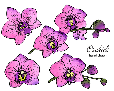 fragrant bouquet: Vector set of hand drawn orchid branches with flowers. Floral botany collection in graphic style with watercolor texture