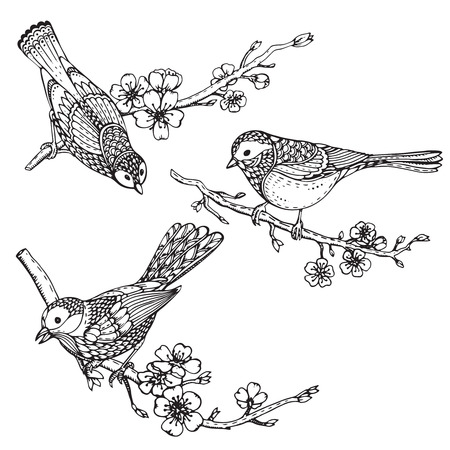 tomtit: Set of hand drawn ornate birds on sakura flower branches. Black and white vector illustration. Each object is isolated on a white background. Illustration