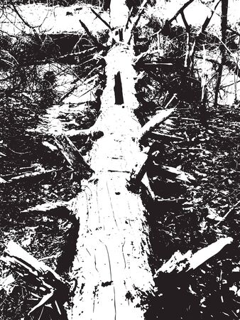 fallen: Black and white vector illustration of fallen tree. Grunge background
