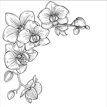 Beautiful monochrome floral background with orchid branches with flowers in graphic style.