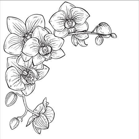 Belle monochrome floral background avec des branches d'orchidées avec des fleurs dans un style graphique. Banque d'images - 56647959