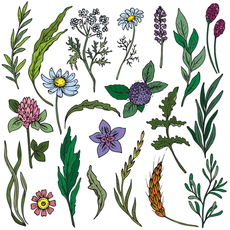 Vector collection of colorful hand drawn flowers and herbs isolate on white background Иллюстрация