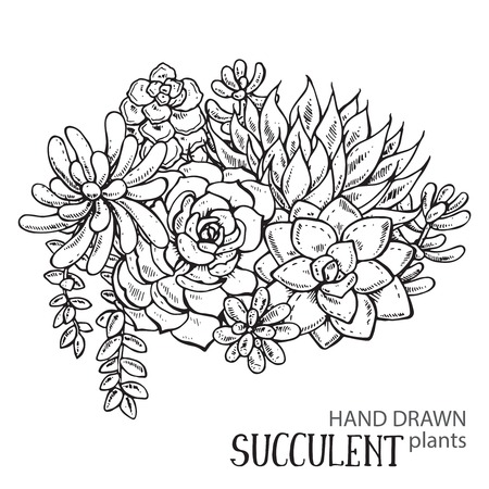 Vector illustration of hand drawn succulent plants. Black and white graphic for print, coloring book. Isolated on white background. Vectores