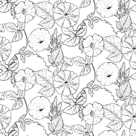 convolvulus: Vector seamless pattern with hand drawn bindweed flowers. Black and white endless background.