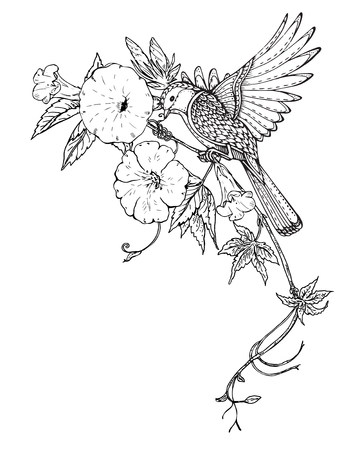 bindweed: Vector illustration of hand drawn graphic bird on bindweed flower branch. Black and white image for for coloring book, tattoo, print on t-shirt, bag, invitations and greeting cards.