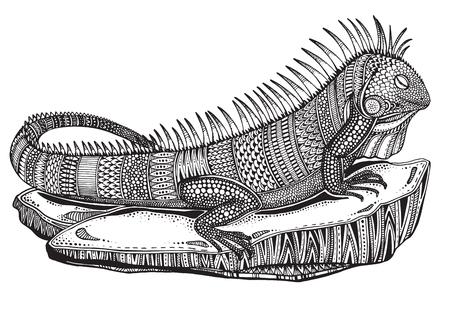 Hand drawn graphique iguane orné sur une pierre avec ethnique illustration doodle pattern.Vector pour livre de coloriage, tatouage, impression sur t-shirt, sac. Isolé sur un fond blanc.