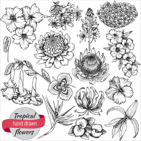 A vector collection of hand drawn tropical flowers, palm leaves, jungle plants. Black and white exotic floral illustration. Isolated objects