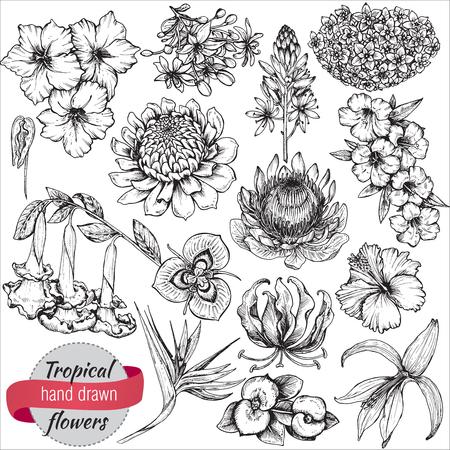 Une collection vectorielle de fleurs tropicales dessinées à la main, des feuilles de palmier, des plantes de la jungle. Illustration florale exotique en noir et blanc. Objets isolés